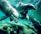 Groep van dolfijnen zwemmen in de zee