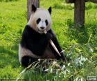 Panda eten