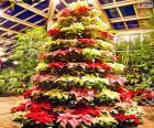 Kerstboom Poinsettia