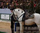 Elegant paard met ornament