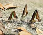 Vlinders op een boomstam