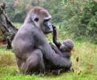 Familie van gorilla's