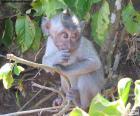 Kleine aap