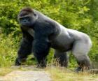 Grote gorilla