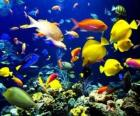 Vissen van verschillende soorten en maten