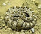 Opgerolde slang