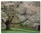 Bloeiende boom
