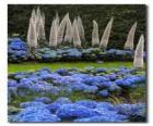 Hortensia's en exotische bloemen