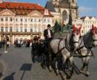 Paard vervoer - Wagen