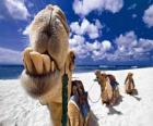 De kamelen van de Drie Koningen rustend op hun weg naar Bethlehem