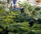 Straat markt van kerstbomen
