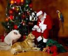 Santa sommige dieren voederen