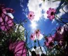 Landschap met bloemen