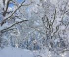 Na de sneeuwval