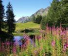 Een meer op de voorgrond bloemen en hoge berg kantoor