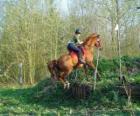 Technical Course Paardensport Mededinging, test de verstandhouding tussen paard en ruiter door middel van verschillende tests.