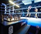 Chess Boxing is een hybride sport die combineert met boksen schaken in wisselende rondes.
