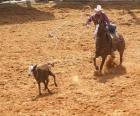 Cowboy op een paard en het vangen van een hoofd van vee met de lasso