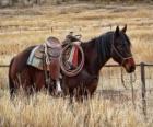 Paard van een cowboy