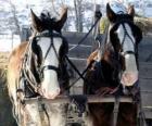 Twee paarden trekken een wagen