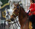 Paarden met ornamenten
