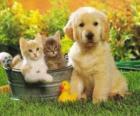 Doggy met twee kittens