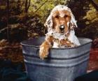 Pup of kleine hond nemen van een bad