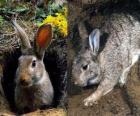 konijn in zijn hol