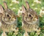 verlegen konijn