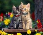 twee katten met ketting