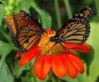 twee prachtige vlinders van aangezicht tot aangezicht