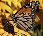 vlinder op een gele bloem