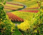 herfst landschap in de Wijngaard