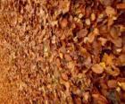 Gevallen bladeren op de grond, een typisch beeld van de herfst