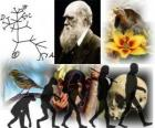 Darwin Dag, werd Charles Darwin geboren op 12 februari 1809. Darwin boom, de eerste opzet van zijn evolutietheorie