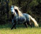 Prachtig paard met lange manen en lange staart