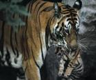 Tigre het uitvoeren van haar baby