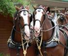 Twee trekpaarden