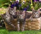 Vier kittens in een mand