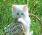 Leuk wit katje