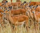 De gazellen