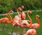 Flamingo's in het water, grote aquatische vogels met roze verenkleed