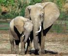 Moeder het regelen van de kleine olifant met de hulp van haar romp