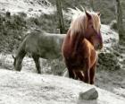 Paarden grazen in het gebied