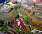 De terrassen van Yunnan, China