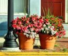 Bloemen in een pot of bloempot