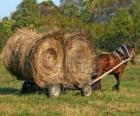 Boer met een paard en wagen