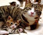 Mama kat met haar baby kat