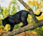 Panther zwart op een tak van een boom