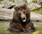 Grote beer in het water